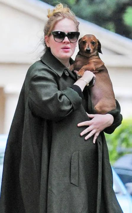 1620123735-adele-little-known-facts-dog-cat.webp